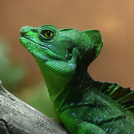 Green Guy by Shawn Thomas - Animals Reptiles