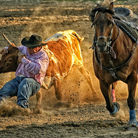 Whoa Steer! by Twin Wranglers Baker - Sports & Fitness Rodeo/Bull Riding (  )