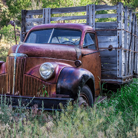 by Becca McKinnon - Transportation Automobiles ( work, studebaker, truck, old truck, work truck, abandoned )