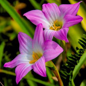by Rob Whidden - Flowers Flower Gardens