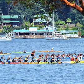 Dragon Boat Race by Carol Leynard - People Group/Corporate ( oars, rowing, race, canoes, men, dragon boats, boats, water, women )