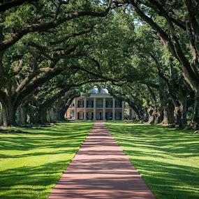 Oak Alley Plantation, Louisiana by Horizon Photo - Buildings & Architecture Public & Historical ( usa )