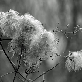Seeds by Randi Hodson - Nature Up Close Other plants ( plant, black and white, seeds,  )