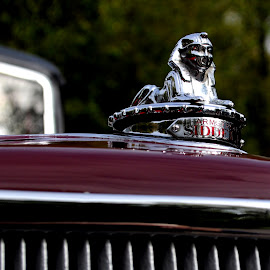 Sphinx on the Bonnet by DJ Cockburn - Transportation Automobiles ( west sussex, armstrong siddley 12 plus, bonnet ornament, england, hood ornament, sphinx, vintage, chrome, vehicle, amberley, amberley museum & heritage centre, antique, classic, autumn historic transport gathering )