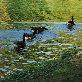 by Rosemary Isabella - Nature Up Close Water