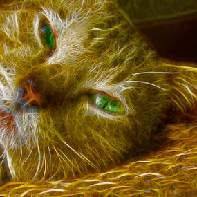 catty by Gie Nations - Abstract Fine Art