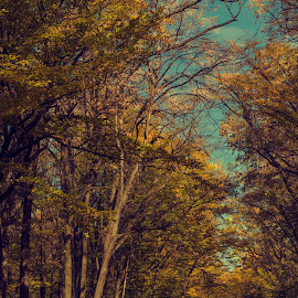 Walk by Alina Dinu - Landscapes Forests ( colour, sky, blue, autumn, trees, forest, road, yellow, leaves, landscape )