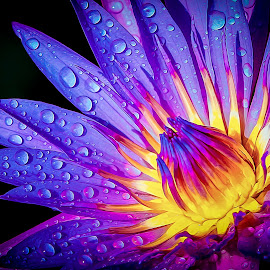 Water Lily by Garces & Garces - Digital Art Things ( macro, water drops, macro photography, water lily )