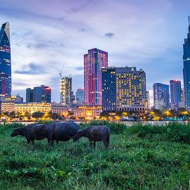 Ho Chi Minh city over the sunset by Bảo Long - City,  Street & Park  Skylines ( modern, bitexco, grass, chi, background, gon, saigon, viet, ho, minh, river, city )