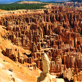 Bryce Canyon by Hal Gonzales - Landscapes Caves & Formations ( national park, canyon, rocks, formations, earth,  )