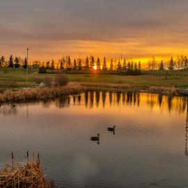 Millwood City Park by Joseph Law - City,  Street & Park  City Parks ( ponds, millwood, bushes, reflections, trees, edmonton, trails, geese, city park, lamp posts )