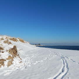 Dune on Beach in Winter by Kristine Nicholas - Novices Only Landscapes ( water, sand, dunes, icy, waterscape, dune, snowy, sea, ocean, seascape, beach, landscape, winter, cold, sand dunes, ice, snow, reservation, waterway )