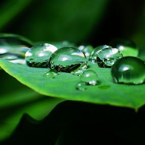 Fresh of Dew's by Sengkiu Pasaribu - Nature Up Close Natural Waterdrops