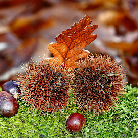 Fall colors by Gérard CHATENET - Nature Up Close Other Natural Objects
