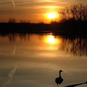 Evening peace by Steve Cooper - Landscapes Waterscapes ( tranquil, peace, pond, evening, goose )