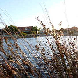 between the reeds by Eldon Pillai - Novices Only Flowers & Plants ( #perth #canningvale #reeds )