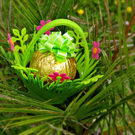 Egg hunting by Ciprian Apetrei - Public Holidays Easter ( palm tree, chocolate, easter, brittany, egg )