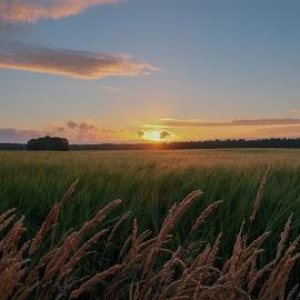 by Stefan Lundgren - Landscapes Prairies, Meadows & Fields ( vargön, närbilder )