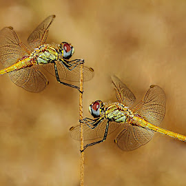 Head to head by Gérard CHATENET - Animals Insects & Spiders