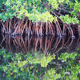 Reflection  by Marie Norman - Nature Up Close Water