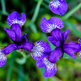 by Forrest Covin - Flowers Flower Gardens ( macro, specieses, species, flowers, flower, photography of botony )
