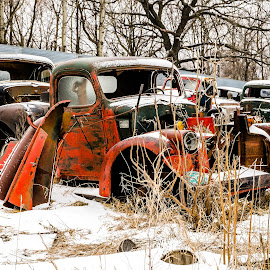 Junked Pick-Ups in the Junk Yard by Ken Brown - Transportation Automobiles ( old, pick-up, truck, rusty, frozen, landscape, weathered, junk, ancient, cold, metal, ice, snow, rust, decaying, peaceful, green, wheels, white, rural, country, dilapidated, winter, red, trees, junk yard, decrepit, pick-ups, abandoned )