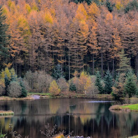 Autumn reflection by Sharon Davies - Novices Only Landscapes ( water, reflection, autumn, green, fall, trees, oranges, lake )