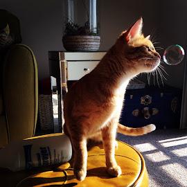 Bubble fun  by Rachel Taylor - Animals - Cats Kittens ( kitten, cat, pet, play, bubbles, adorable, fun, animal )
