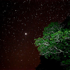 Stary Tree by Chirag Mer - Landscapes Starscapes