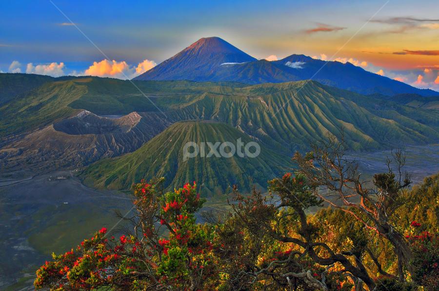 Morning @ Bromo by Anif Putramijaya - Landscapes Mountains & Hills