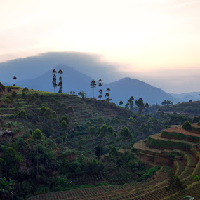 the field by Gunarsa Gunarsa - Landscapes Mountains & Hills ( field, sunset, pangalengan )