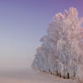 Winter stillness by Remigijus Drevinskas - Landscapes Prairies, Meadows & Fields ( bird, moon, winter, snow, frost, trees )