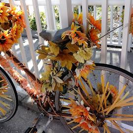 by Barbara Boyte - Transportation Bicycles