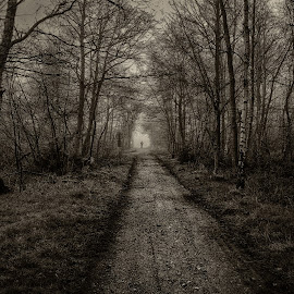 Fanø forest by Froddy Baun - Instagram & Mobile Android ( samsung s2, fanø, black and white, track, forest, mist )