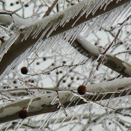 Iced over by Shelley Deckard - Nature Up Close Trees & Bushes