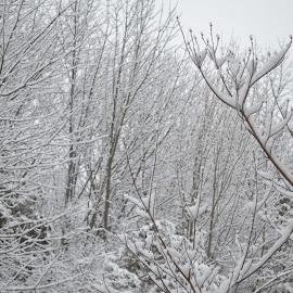 by Shree Raja - Nature Up Close Trees & Bushes