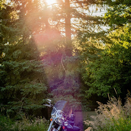 by James Baker - Transportation Motorcycles ( harley, motorbike, hdr, grass, sinset, parked, lens flare, rural, farm, fravel, bike, red, davidson, trees )