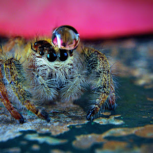 spider_874 pix.jpg
