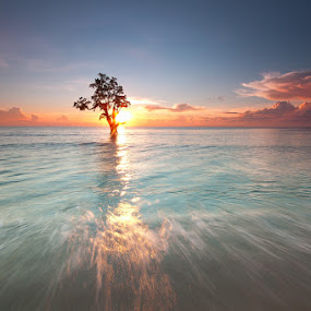 communing with God by Rodrigo Layug - Landscapes Waterscapes ( nature, waterscape, tree in water, seascape, sunrise )