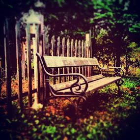 Spring in garden by Nat Bolfan-Stosic - Nature Up Close Gardens & Produce ( bench, colors, abandon, garden, spring )