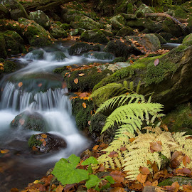 Autumn creek by Radek Lauko - Landscapes Waterscapes ( water, autumn leaves, nature, autumn, creek, bracken, forest )