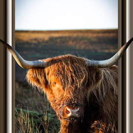 by Paul Scullion - Digital Art Animals ( digital art, framed, wildlife, cow, animal )