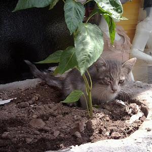Istanbul cat.jpg
