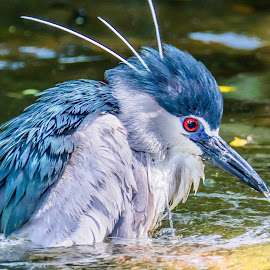 I Missed by Ken Nicol - Animals Birds (  )