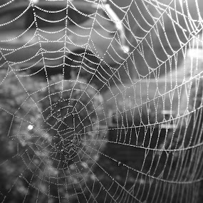 A Work of Art 02 by Charlotte Swann - Nature Up Close Webs