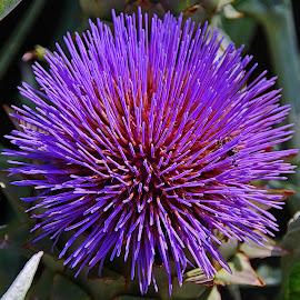 by Irena Trkulja - Flowers Single Flower