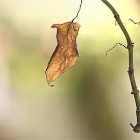 daun kering by Budie Deathlust - Nature Up Close Leaves & Grasses ( daun )
