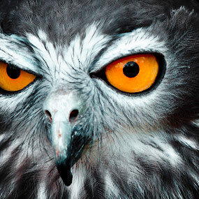 by Jaime Gomez - Animals Birds