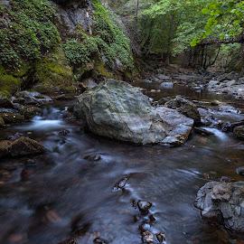 Byala reka (white river) by Petar Shipchanov - Landscapes Forests ( water, kalofer, mountain, park, balkan, eco path, white, stone, stara planina, forest, bulgaria, river )