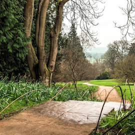 The Road To ......? by Jackie Matthews - City,  Street & Park  Vistas ( countryside, path, trees, daffodils, view, cotswolds, canes,  )